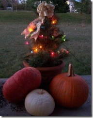 pumpkintree